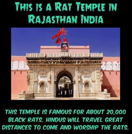 Hindu Rat Temple.jpg